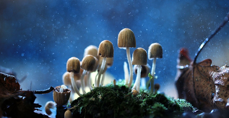 Biotech Secures Supplier of Psilocybin, Other Psychedelics